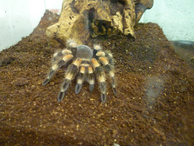 oxford university museum of natural history tarantula via lovebirds vintage