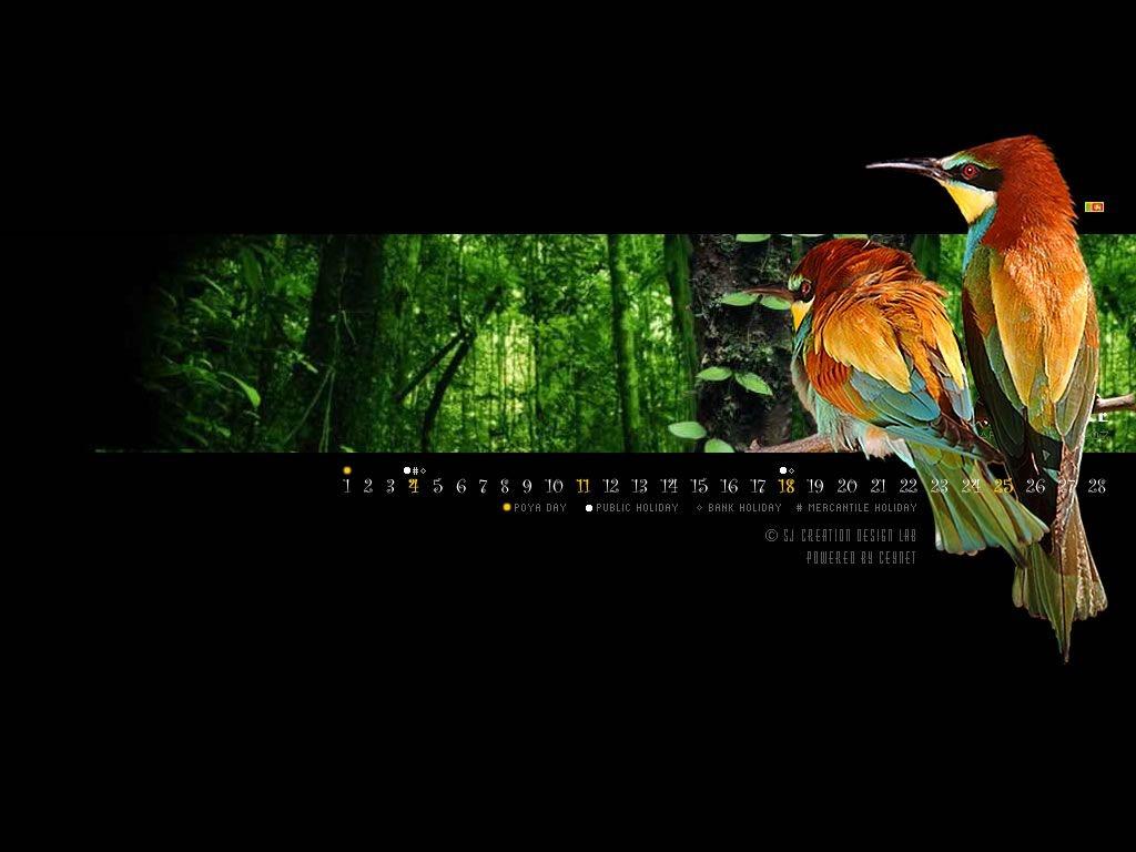 Free Wallpapers: Love Bird Wallpaper, Wallpaper Love Bird, Love Bird Wallpaper for Desktop