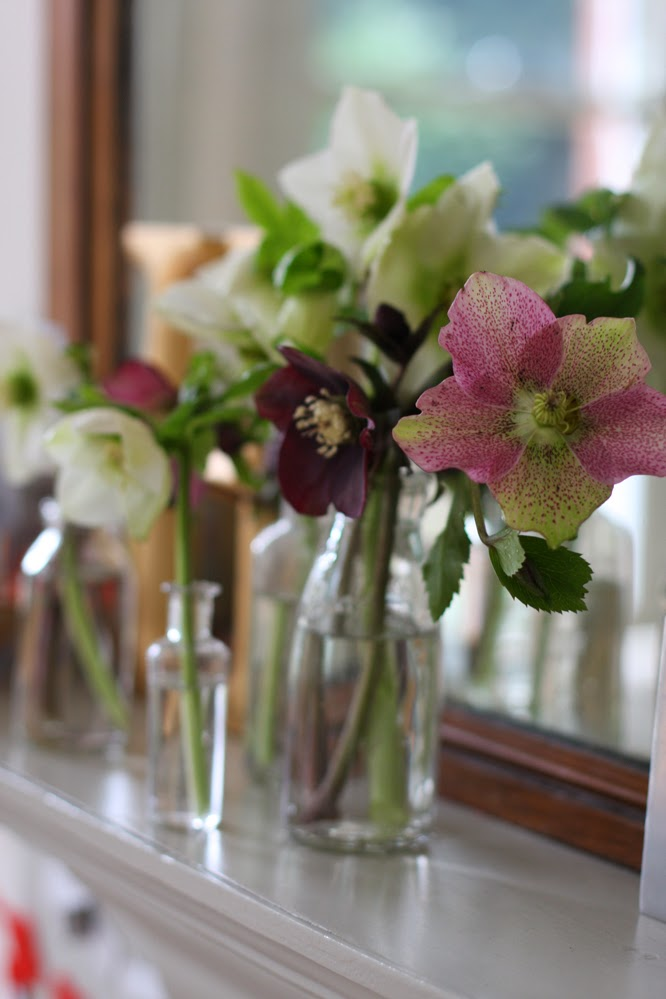 the Kitchen mantlepiece with hellebores from the garden by Alexis www.somethingimade.co.uk