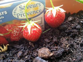 Deux fraises cachées dans une image, elle-même prise en image!