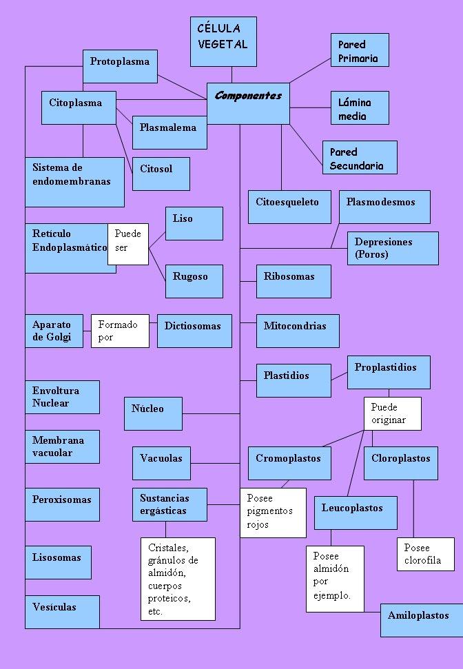 el esquema de la celula