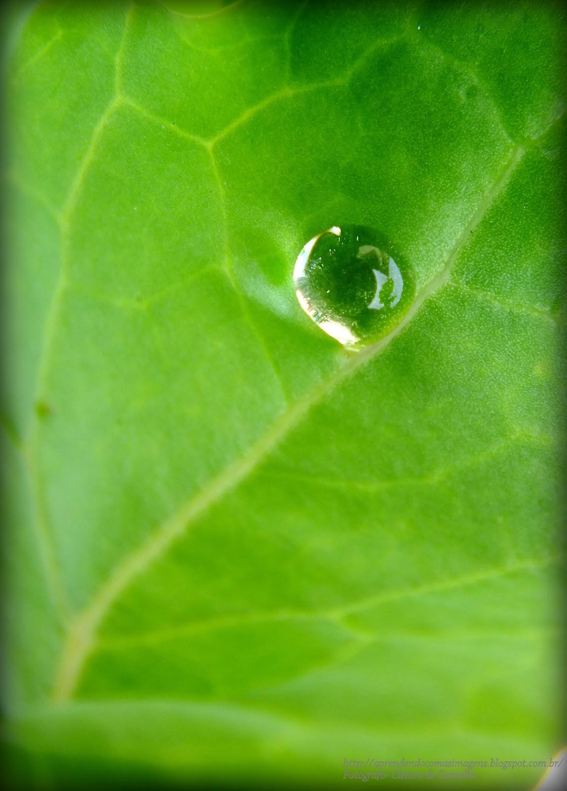 http://aprendendocomasimagens.blogspot.com/2013/09/o-anseio-pela-existencia.html - A natureza busca na simplicidade o valor da vida