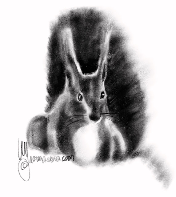 Squirrel drawing by Artmagenta