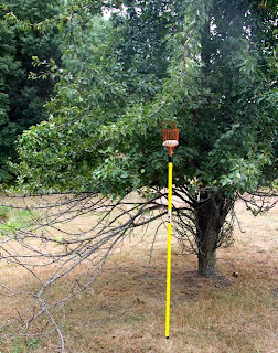 photo of extensible pear picker