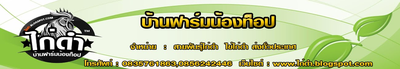 ไก่ดำ บ้านฟาร์มน้องท๊อป จังหวัดเชียงราย จำหน่ายทั้งปลีก-ส่ง ทั่วประเทศ www.ไก่ดำ.blogspot.com