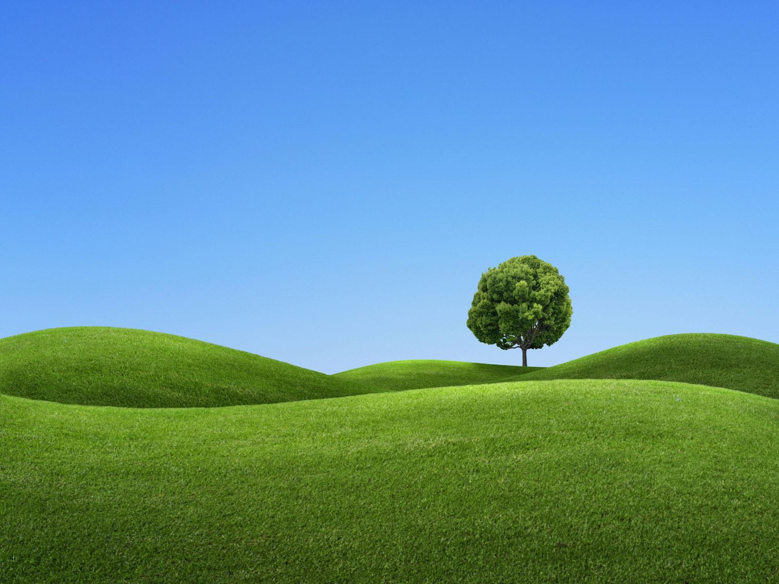http://3.bp.blogspot.com/-5kJsNabfGII/T8Yzpwv6eRI/AAAAAAAAyak/q45FocQEX1A/s1600/A_tree_on_a_green_hill_3d_wallpaper.jpg
