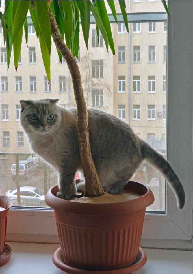 Journal d 39 un chat les aventures d 39 eirwena r bellion for Plante yucca chat