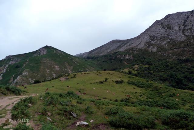 Collada Bustaco y Pico Pienzu - Asturias
