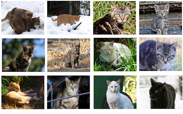 12 Months of cats - the Feral Life 2013 cat photo calendar