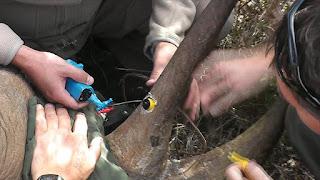 Objetivo das câmeras é proteger os animais da caça predatória (Foto: Reprodução/BBC)