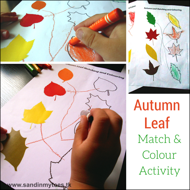 Fun autumn leaves matching and colouring activity for toddlers and preschoolers, with free printable.