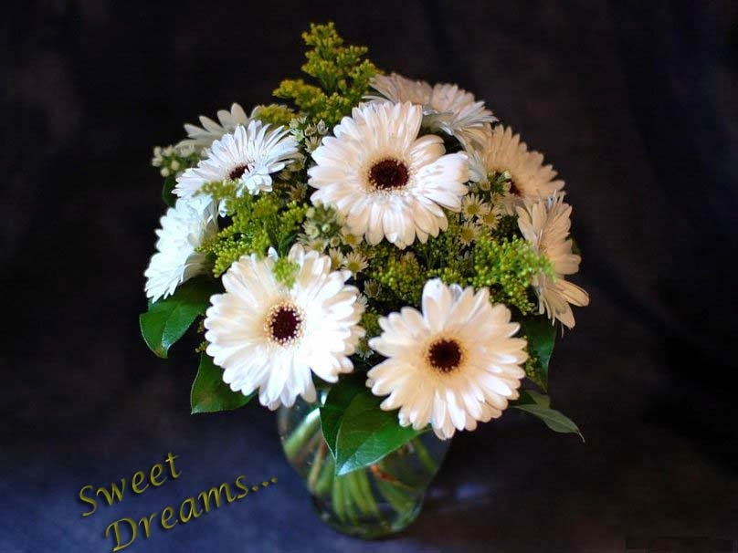 beautiful-white-flowers-good-night