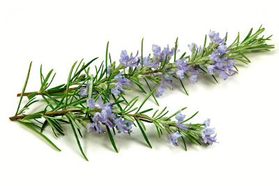 Medicinal herbs that improve concentration