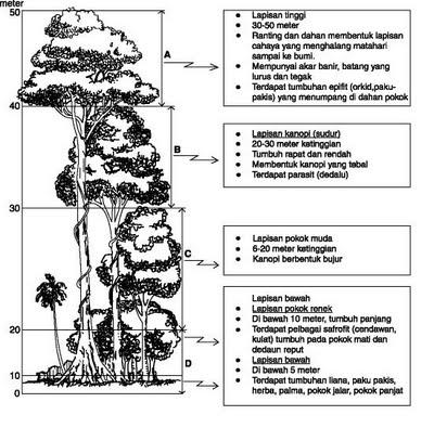 Tumbuhan Semula Jadi Dan Hidupan Liar Hutan Hujan Tropika