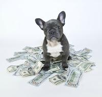 Costo de mantener a un perro