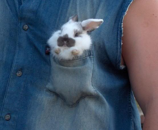 Cute small buny