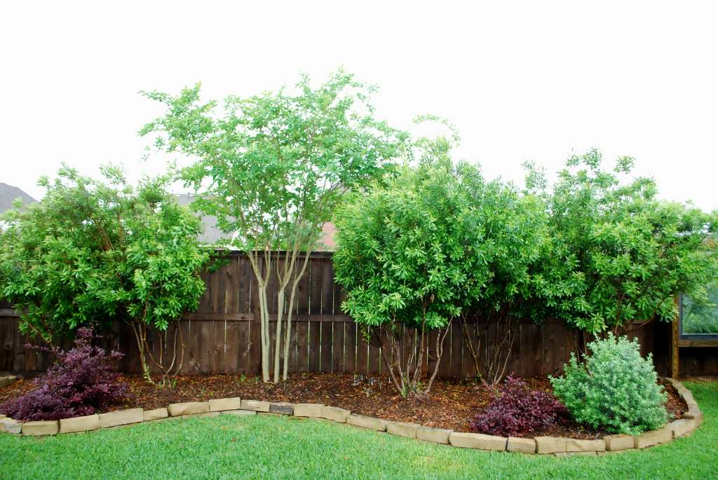 Centerpointe communicator landscaping made easy part iii for Backyard privacy landscaping trees