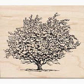 Sketch of apple tree