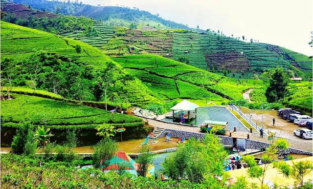5 Kebun Teh Untuk tempat Wisata Indonesia