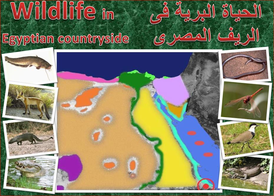 الحياة البرية فى الريف المصرى Wildlife in the Egyptian countryside