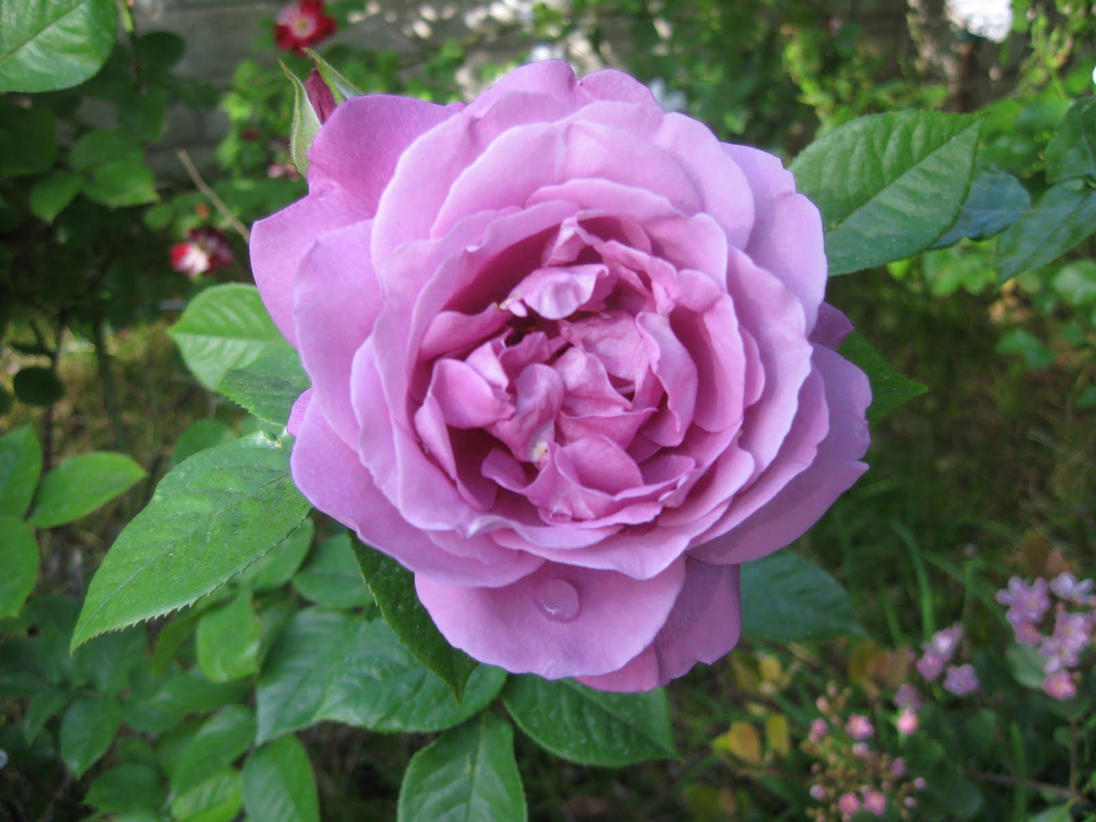 Roses Garden Wendys Hat