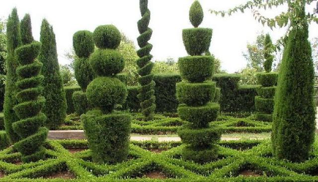Figuras con arbustos poda ornamental o poda topiaria terrazas y jardines fotos de jardines - Arbustos de jardin ...