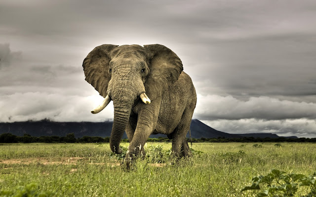 amazing-elephant-wallpaper