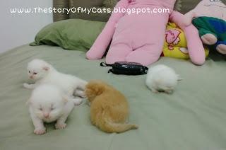 week 3 kitten