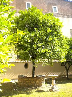 L'arancio di San Domenico