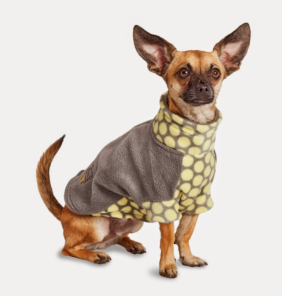 How to measure dog for clothes