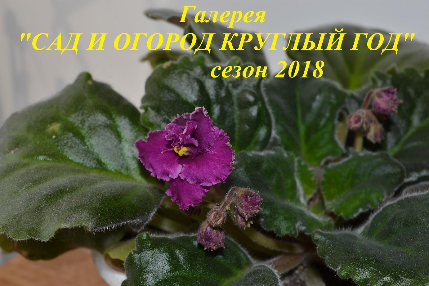 Сад и огород круглый год2018.