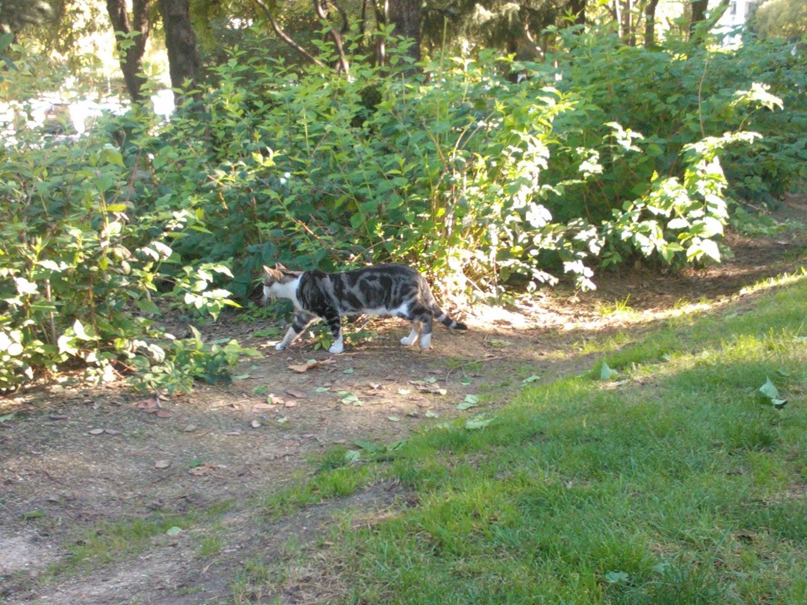 Blog del membrillato mi gato por el parque y mi jardin for Ahuyentar gatos de mi jardin
