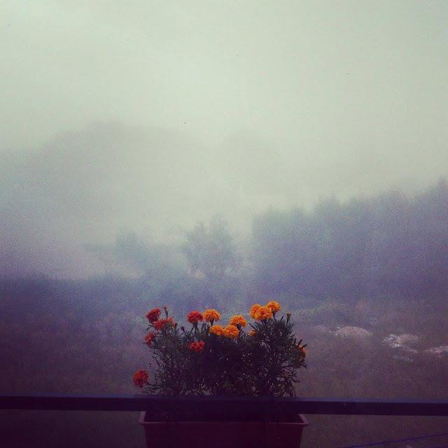 love mgła
