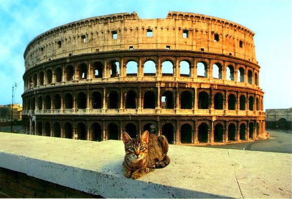 http://3.bp.blogspot.com/-5msfgzc46m4/VUDZZrvlD4I/AAAAAAAAFXM/e6Mq3dSoaX4/s1600/colosseum_cats-001.jpg