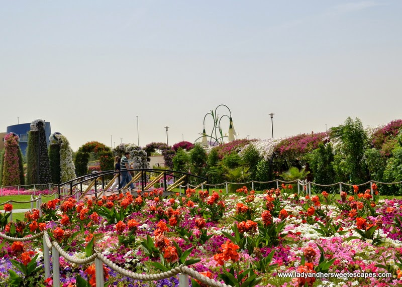 different flowers at Dubai Miracle garden