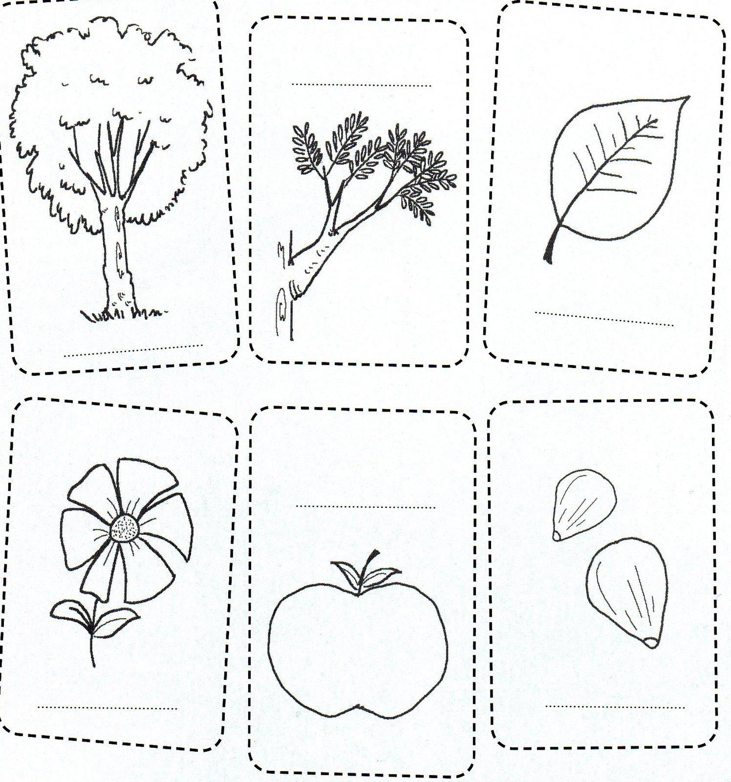 Escuela Especial Abierta: PLANTAS. PARTES Y GERMINACIÓN