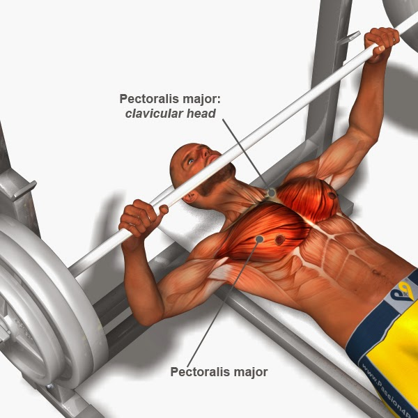 Chest Exercises