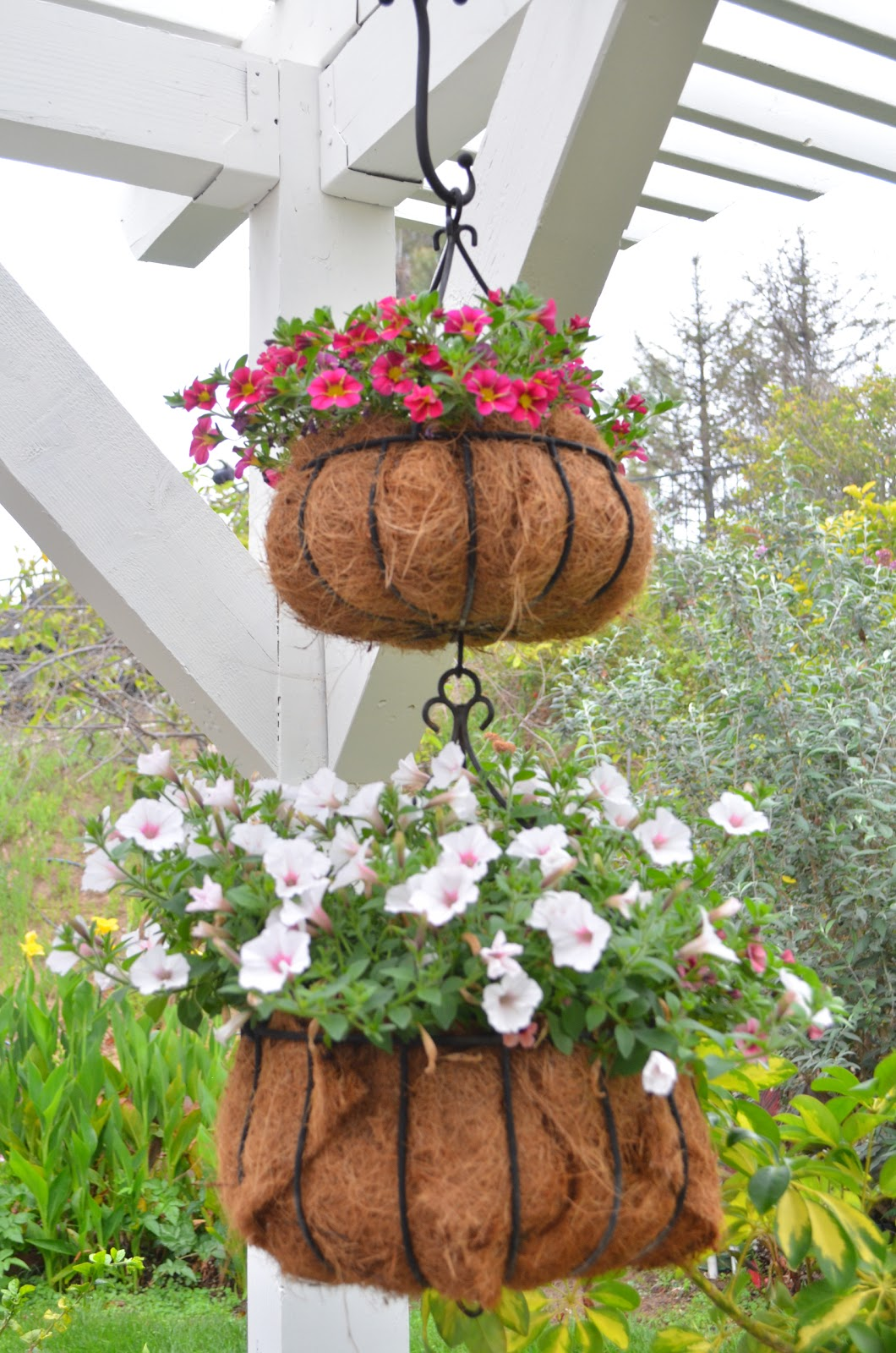 Kitchen Garden India Entertaining From An Ethnic Indian Kitchen Hanging Baskets