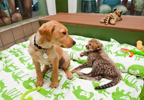 Inusual amistad entre animales de distintas especies