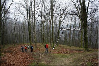 Entramos en un pinar y seguimos los hitos de piedras