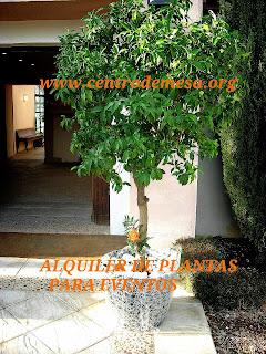 ALQUILER DE PLANTAS