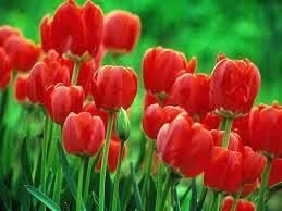 Gracias Sara por estas hermosas flores celebrando los 7 años del blog !!!!
