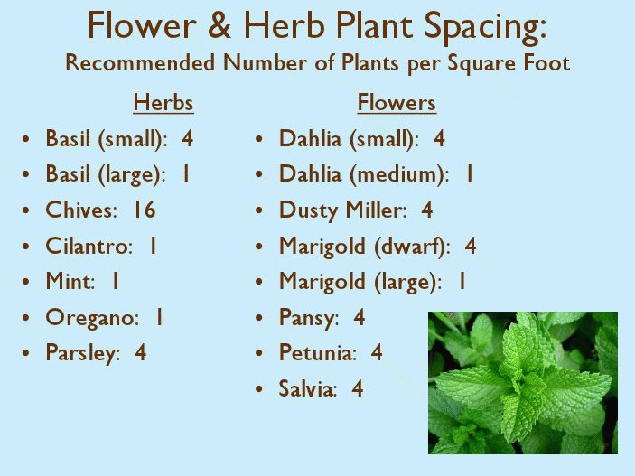 Flower And Herb Square Foot Plant Spacing