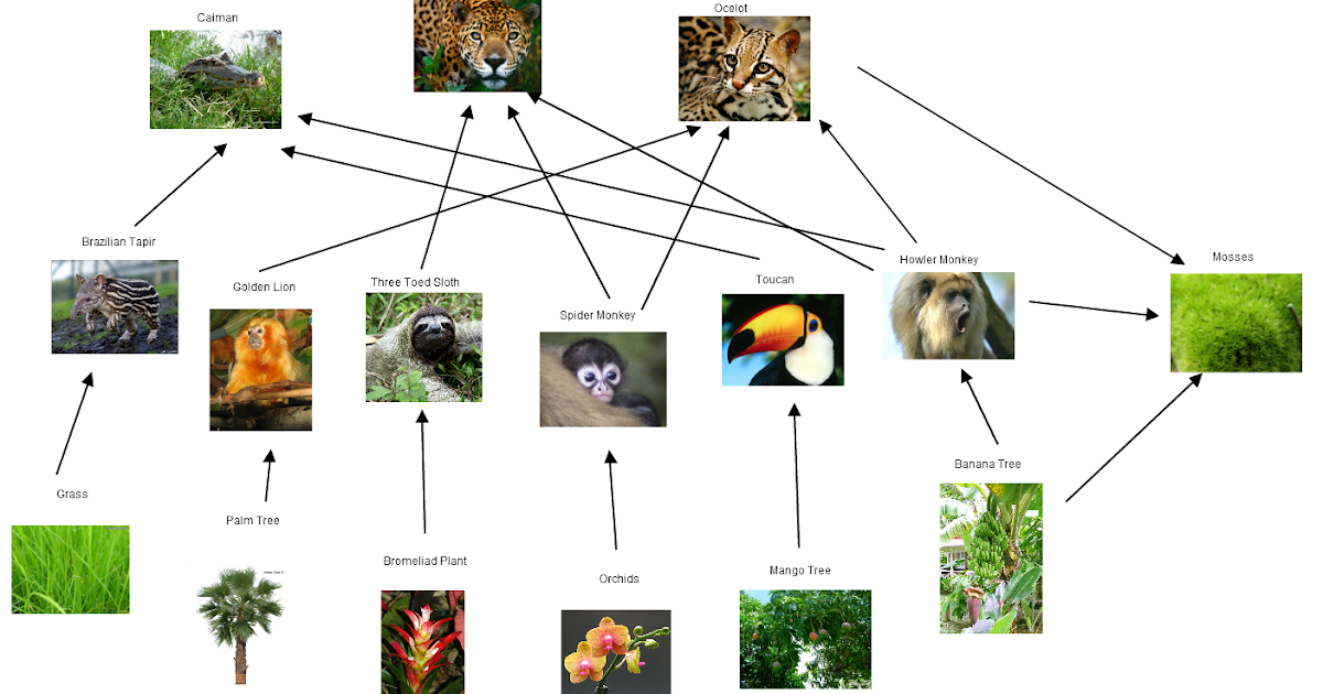Tropical rain forest travel Blog: Day 4 : food web and pyramid