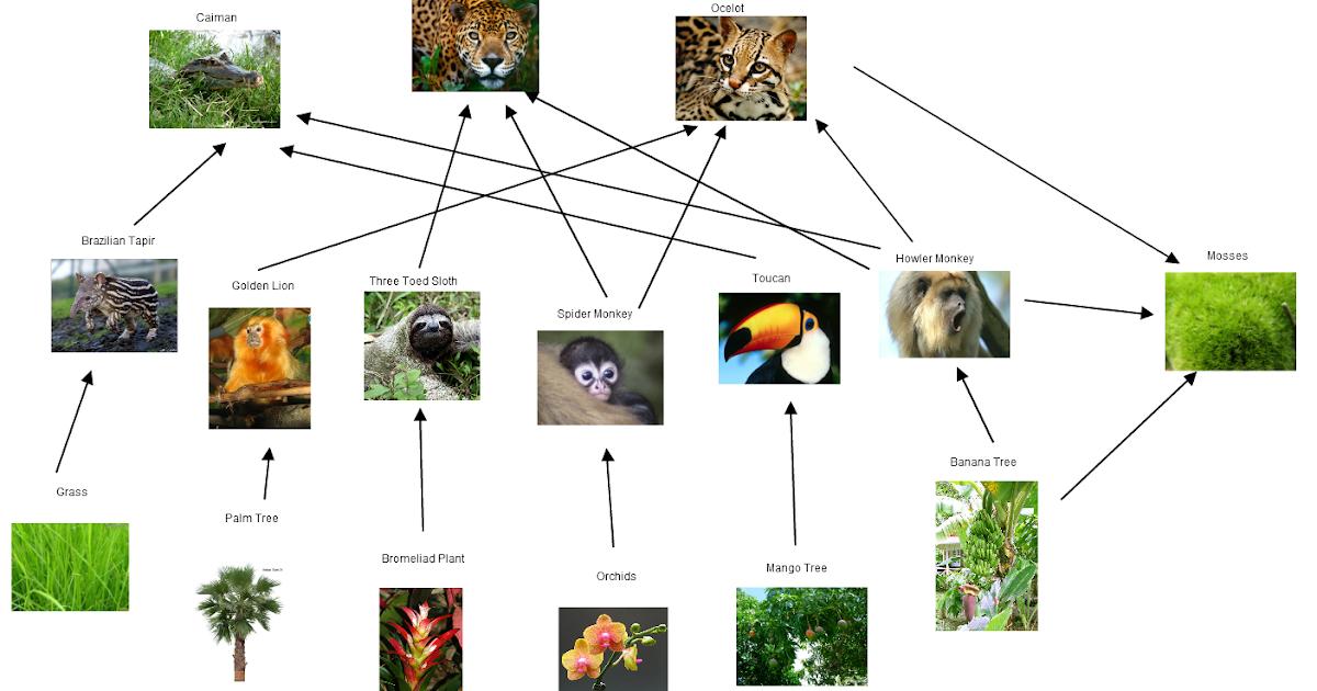 Temperate rainforest animals food web