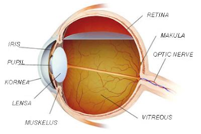 Bagian-bagian mata beserta fungsinya