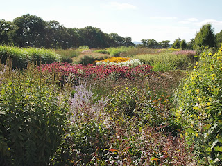 Sussex Prairies Garden. Amazing flowers and good example of garden design. Waves of beautiful perennial plants