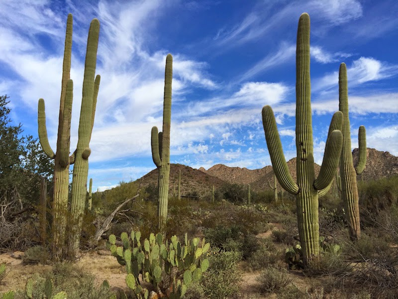 Saguaro National Park in Tucson