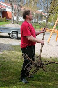 Piha- ja puutarhapalveluita erilaisina hoito-, istutus- ja leikkauspalveluina