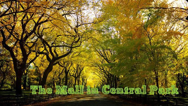 New York Insolite : les ormes de Central Park